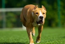 Bund soll Einhaltung der Regeln für Hundehaltung kontrollieren