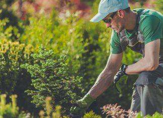 Grünräume fit für den Klimawandel