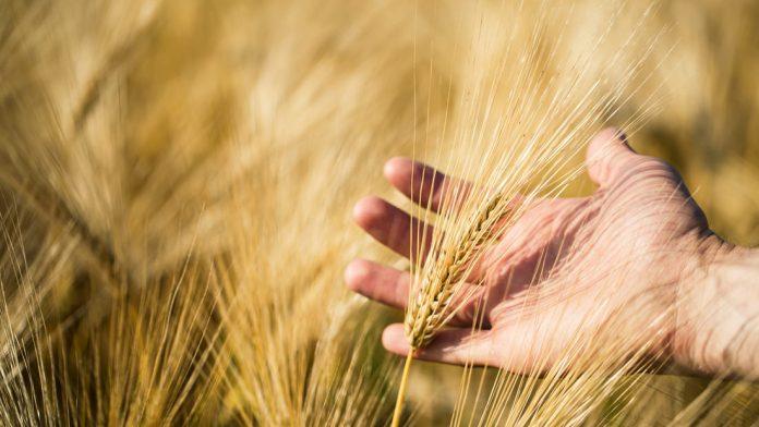 Symbolbild-Landwirtschaft